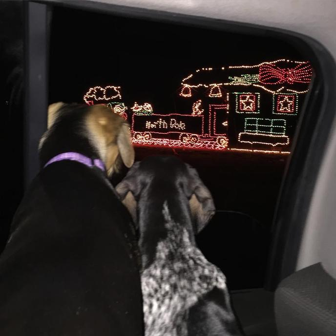 Two Dogs Look Out at Christmas Lights From the Car at Dog-Friendly Holiday Light Fantasia.