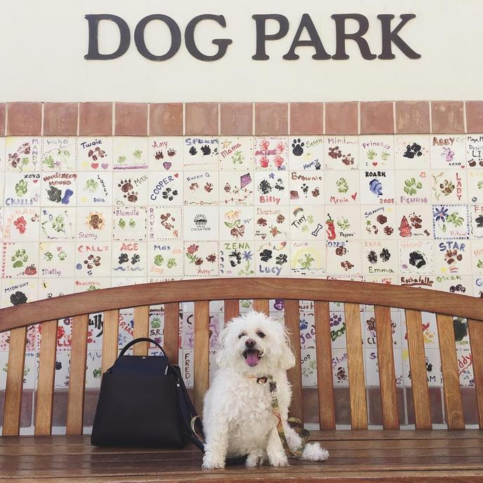 The Otay Ranch Dog Park located in the middle of the pet-friendly Otay Ranch Town Center mall,.