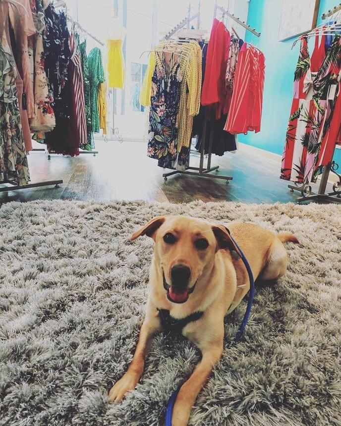 Bell Tower Shops mall in Fort Myers, FL welcomes dogs.