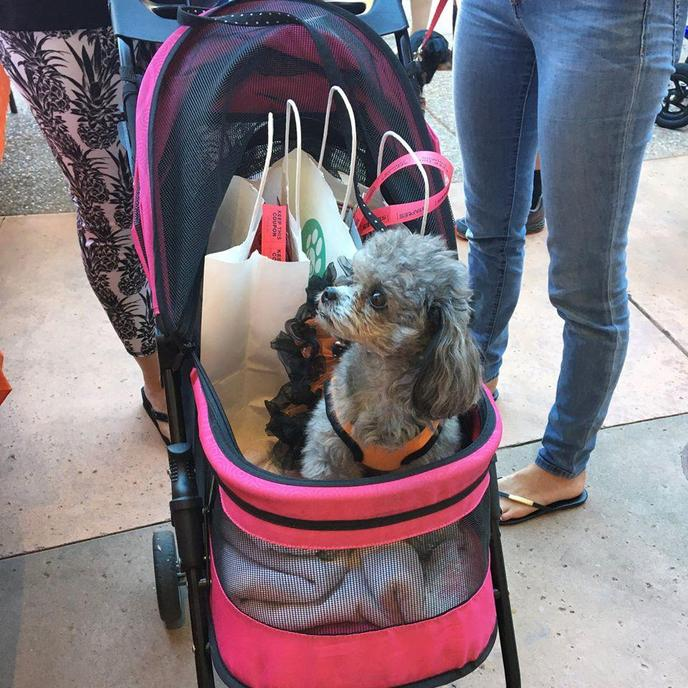 Check out Yappy Hour at the pet-friendly mall, Blackhawk Plaza.