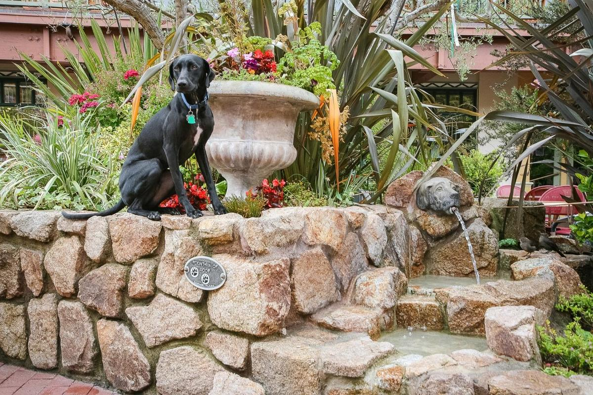 Ace visits the Fountain of Woof at Carmel Plaza.