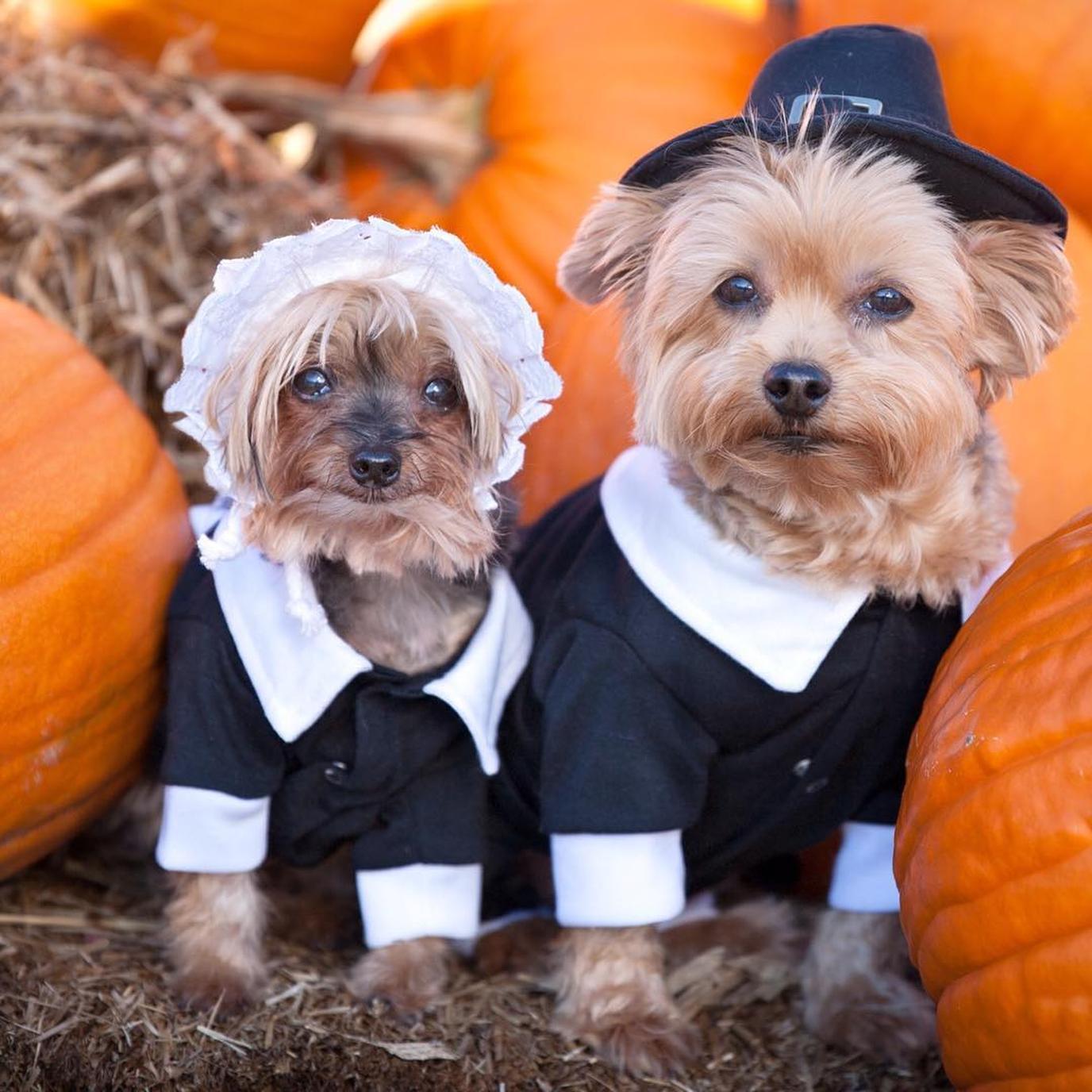 BringFido's Thanksgiving Pet Safety Tips