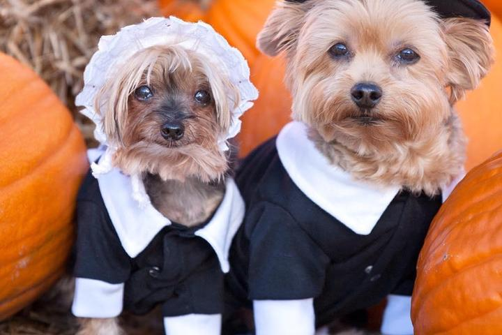 BringFido's Thanksgiving Pet Safety Tips