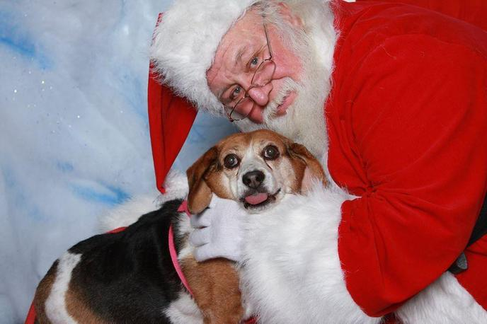 Bring your dog to see Santa at A Christmas Story Reenactment at the Indiana Welcome Center.