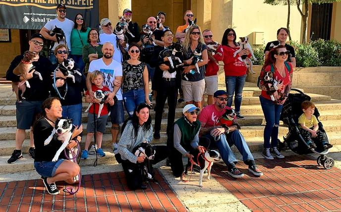 A Group of People and Their Boston Terriers Gather at a Dog-Friendly December Event in Florida.