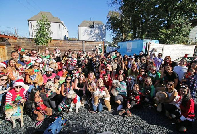 A Group of People and Dogs Wearing Ugly Sweaters at a Dog-Friendly December Event in Houston.