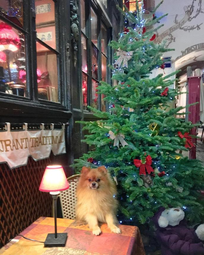 A Dog Sits at a Table Beside a Christmas Tree at a Pet-Friendly Christmas Market in France.