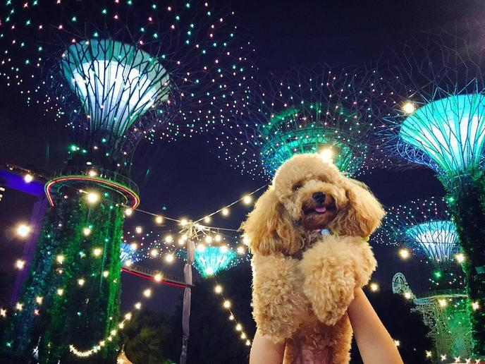 Christmas Wonderland Is a Pet-Friendly Christmas Market in Singapore.