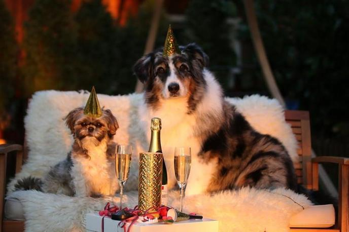 Two Dogs in Party Hats Pose with Champagne for a Dog-Friendly New Years Eve Event in Chicago.