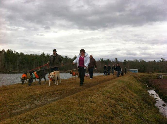 Pets and Parents Participate in the Post Thanksgiving Dog Walk in Dog-Friendly Marion.