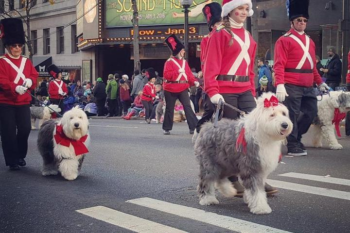 Pet-Friendly Rooms With a View of Your Favorite Thanksgiving Day Parades