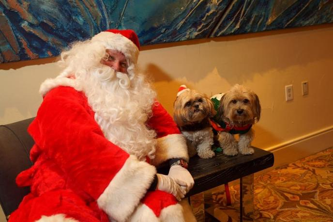 Two Dogs Pose With Santa at Wags N Wine Holiday Party, a Dog-Friendly December Event in California.