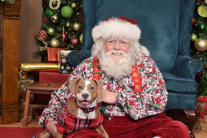 Get the Best Santa Pics With Your Dog.