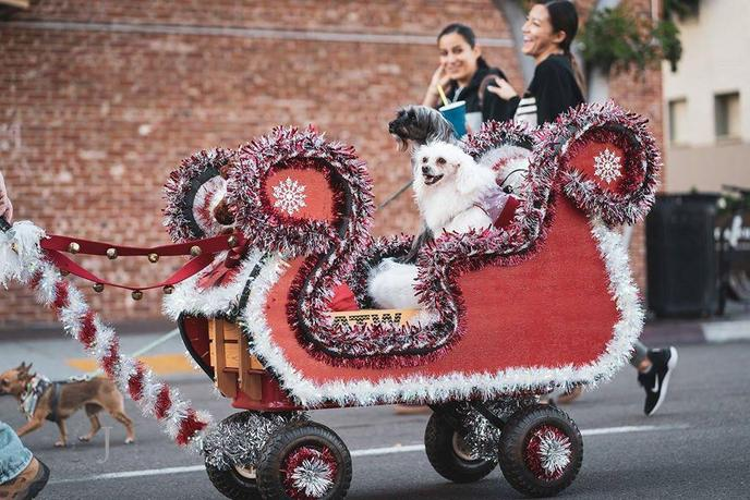Two Chinese Cresteds Ride in a Sleigh During the Annual Gaslamp Holiday Pet Parade.