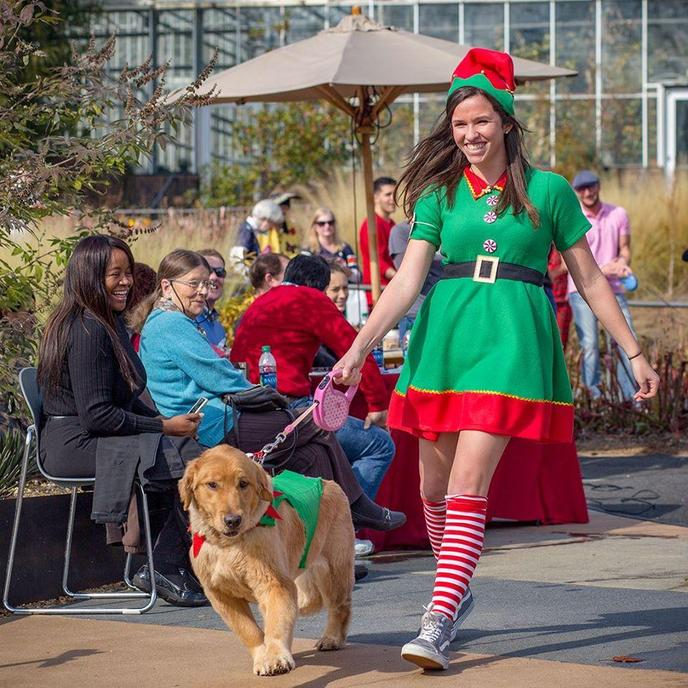 A Woman and Retriever in Christmas Costumes Walk in the Atlanta Botanical Garden Reindog Parade.