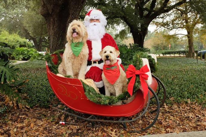 Two Dogs Sit With Santa in His Sleigh at a Pet Parade in New Orleans.