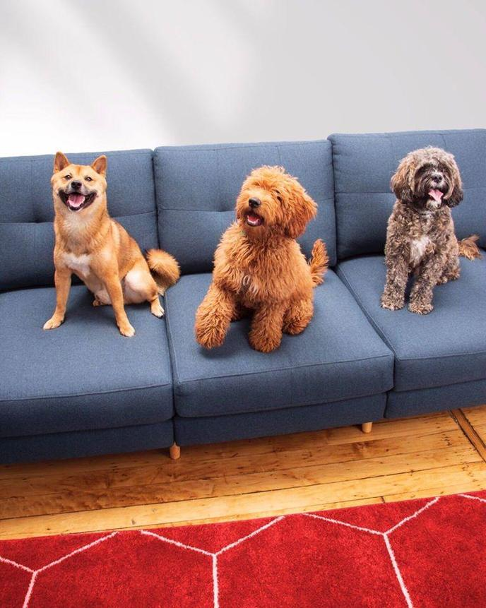Three Dogs Sit on the Couch and Wait for Black Friday Deals for Pets..