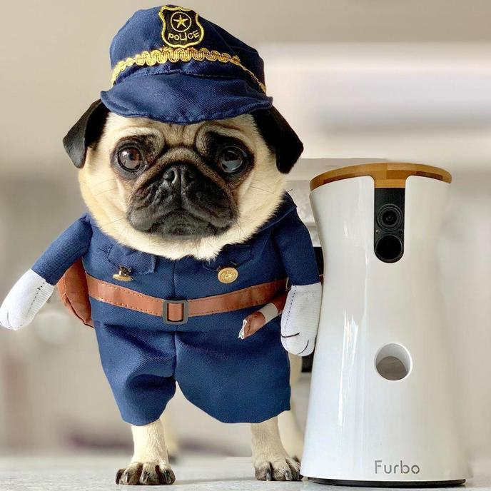 A Pug Dressed as a Cop Stands Beside a Furbo Camera.