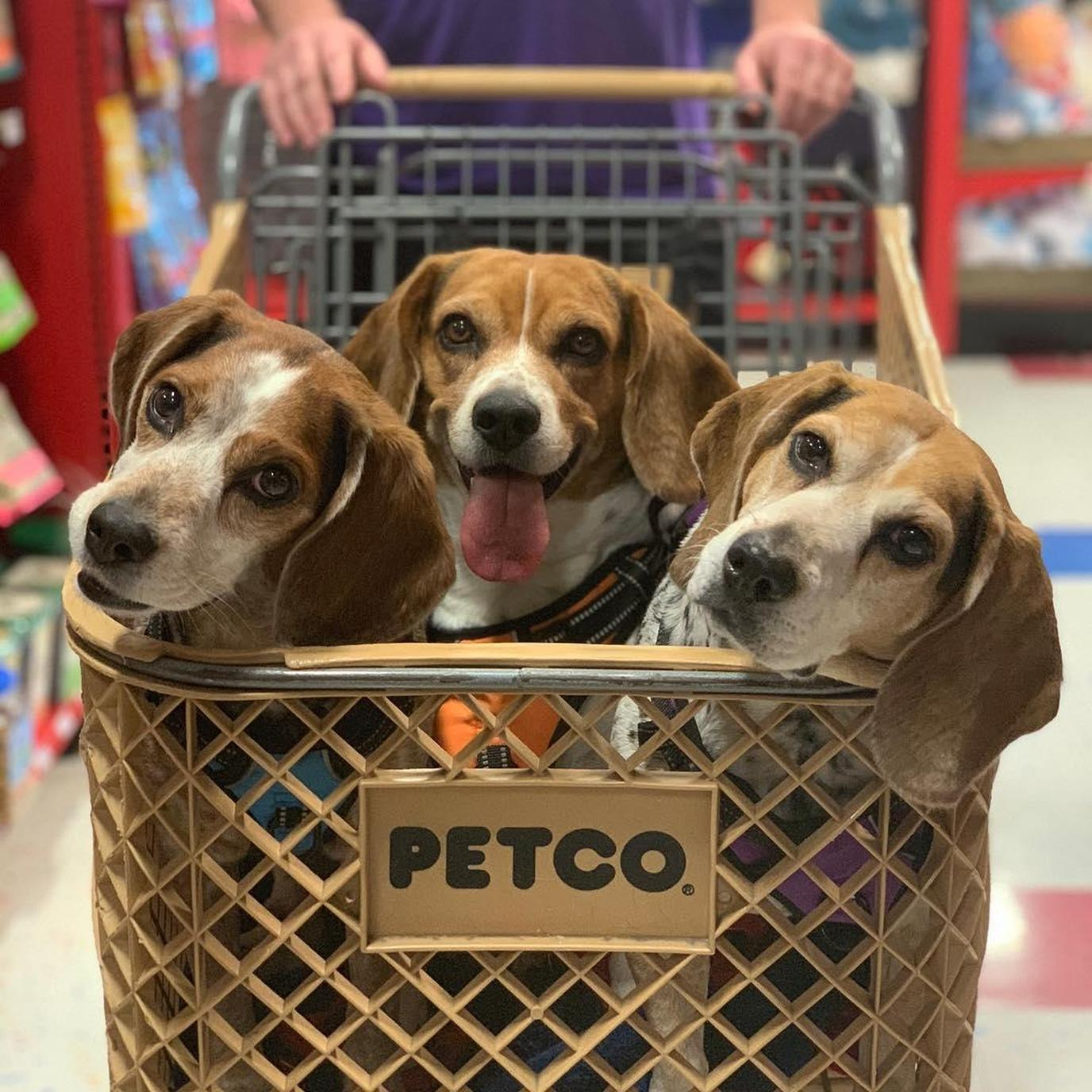 Three Beagles Sit in a Cart While Shopping for Black Friday Pet Deals.