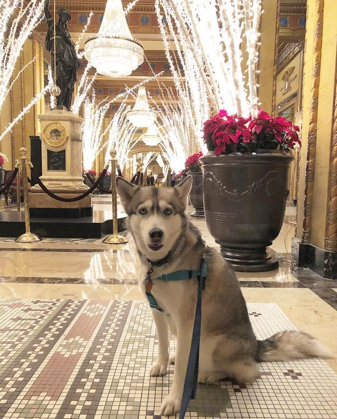 A Dog Takes a Photo in the Lobby of a Dog-Friendly Resort in New Orleans.
