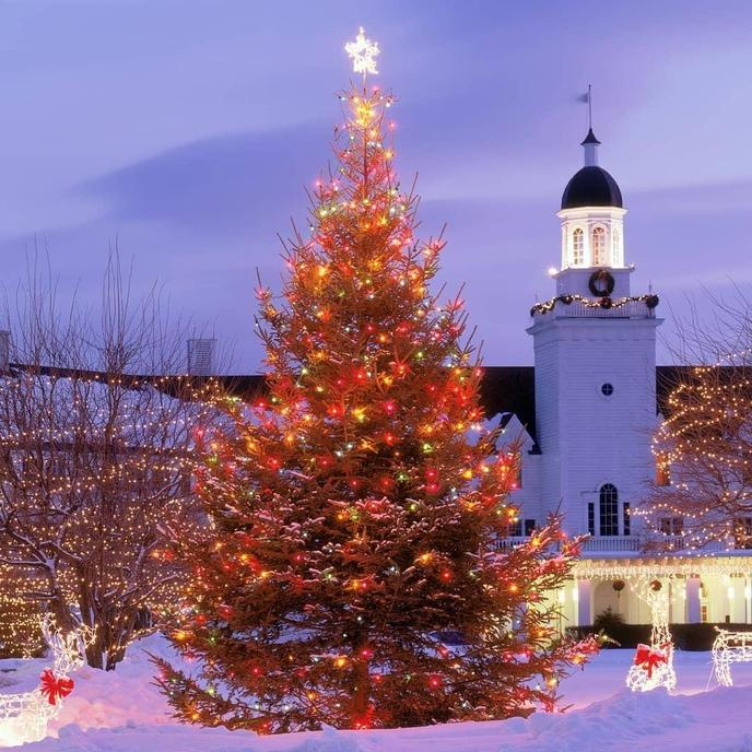 A Snow-Covered Outdoor Christmas Tree Twinkles at a Dog-Friendly Resort in Upstate New York.