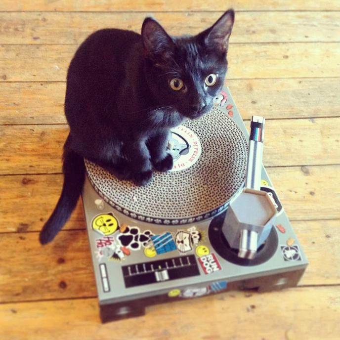 A Cat Sits on the DJ Deck Scratching Pad.