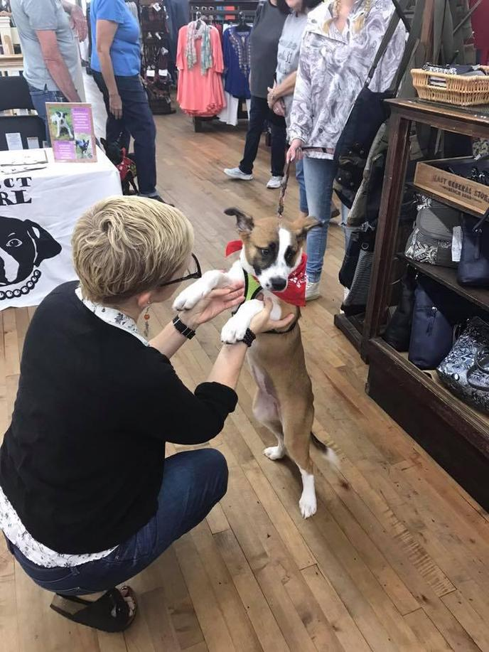 Bring your dog to shop small at Mast General Store locations.