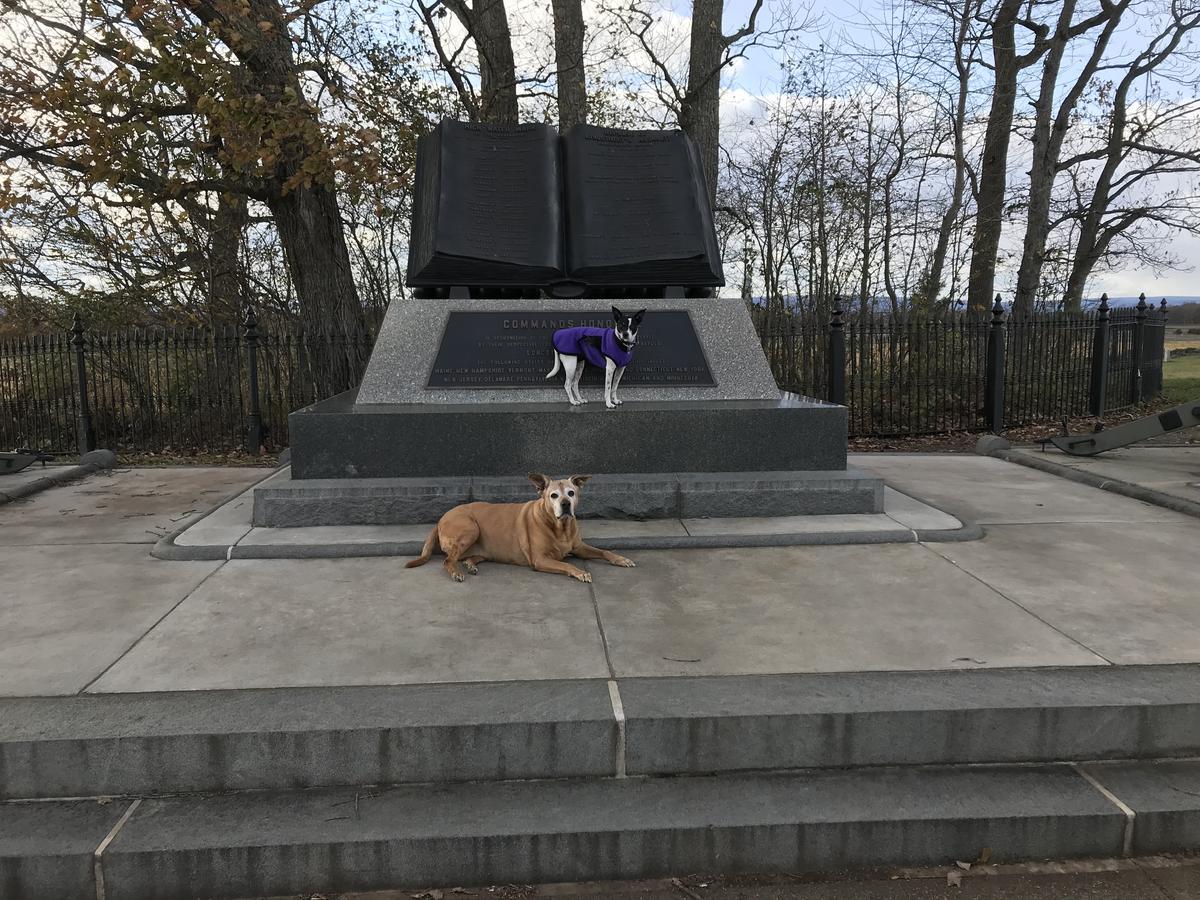 Pups On the battlefield