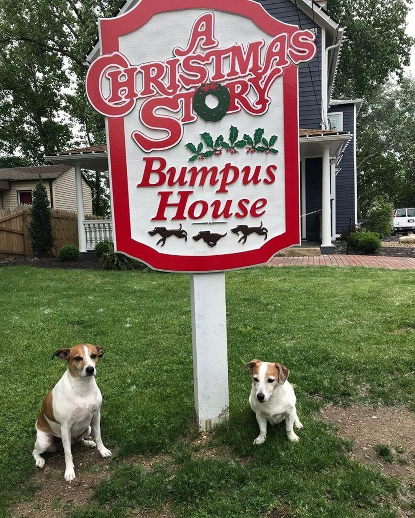 Two Jack Russells Stand by a Christmas Story Sign at a Pet-Friendly Christmas Race in Ohio.