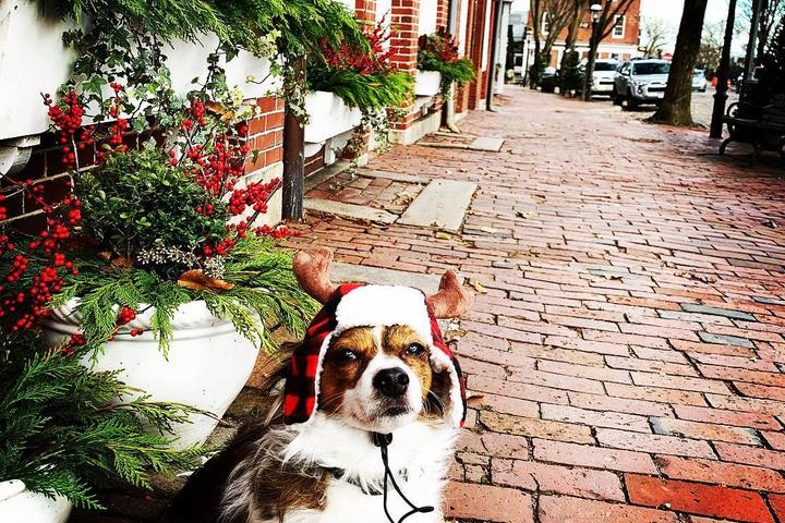8 Small Towns to Visit for a Dog-Friendly Christmas