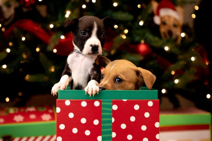 Last-Minute Gifts for the Dog Person on Your List.