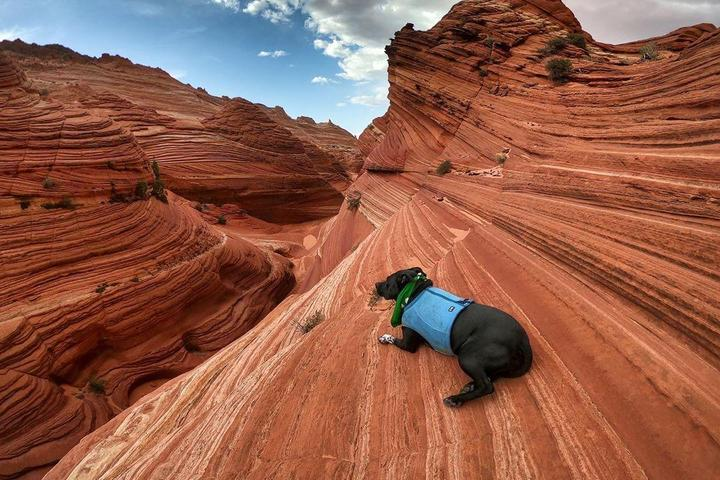 10 Unforgettable Experiences to Put on Your Dog's Bucket List