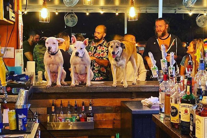A Group of Dogs Rest at the Dog Bar in Saint Pete on New Years Eve.