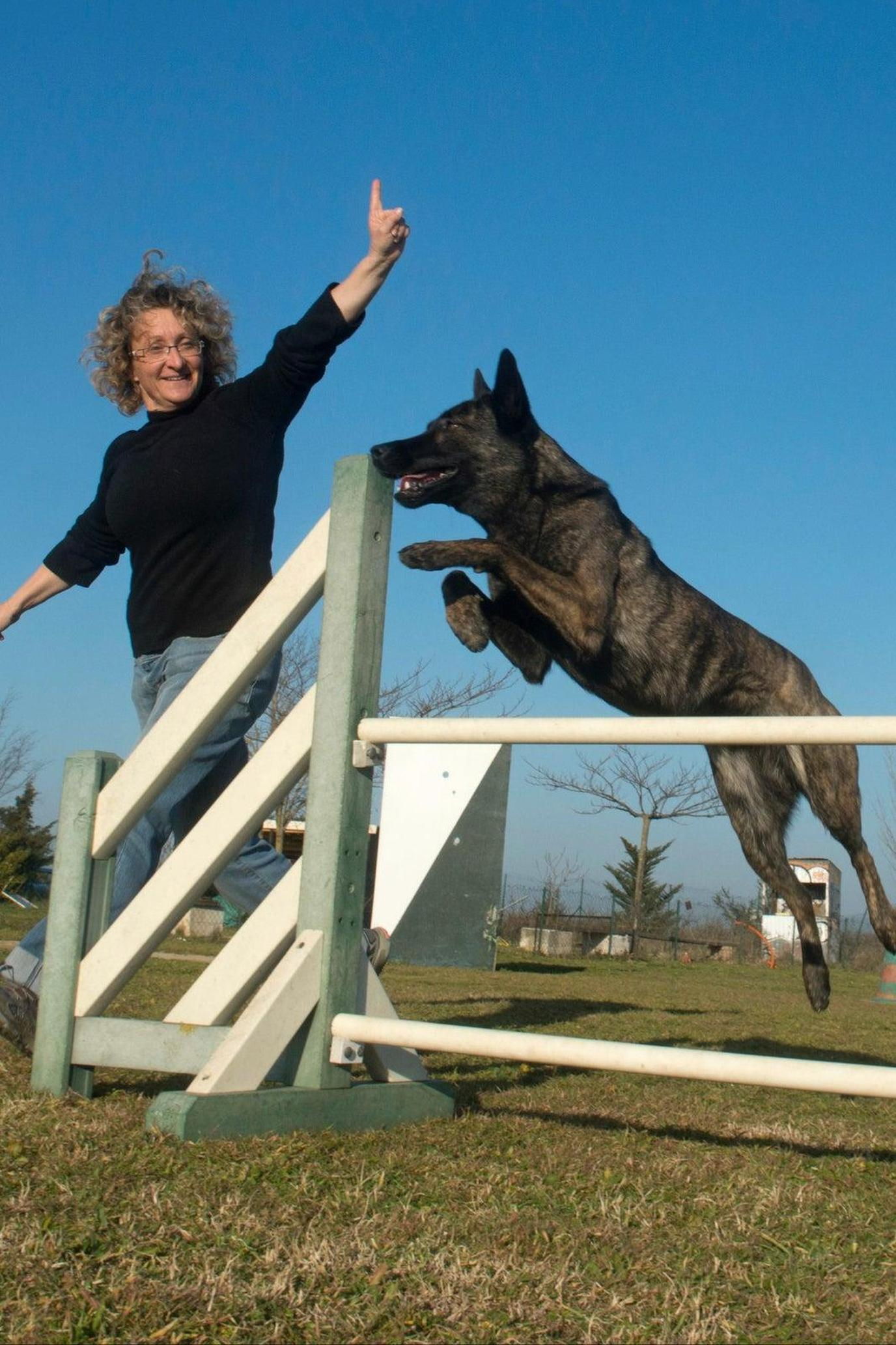 A Black Dog Jumps Over a White Agility Fence During a Pet-Friendly Airbnb Experience in Canada.
