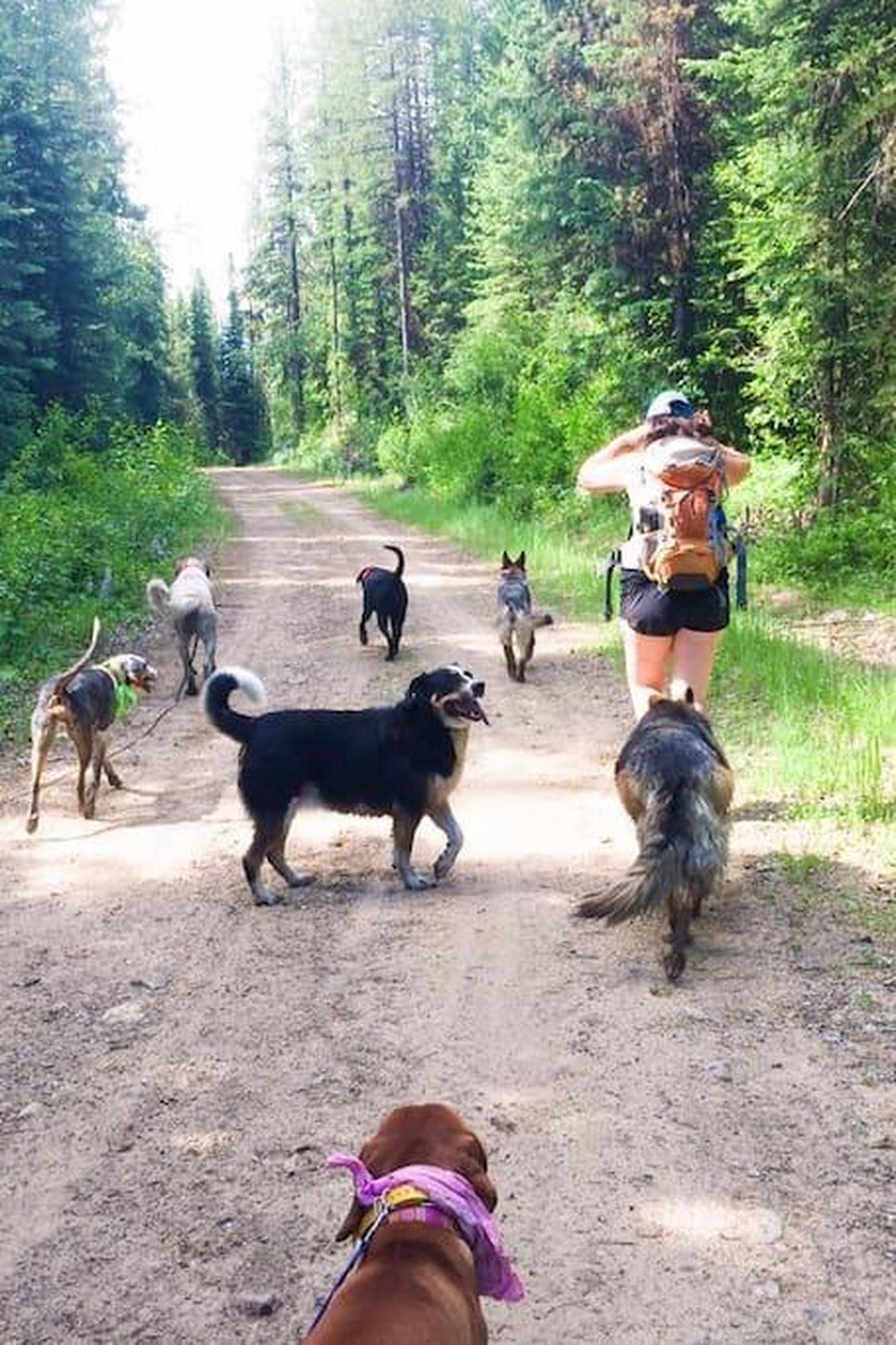 A Woman Hikes With a Group of Large Dogs on a Pet-Friendly Trail in Oyster Bay.