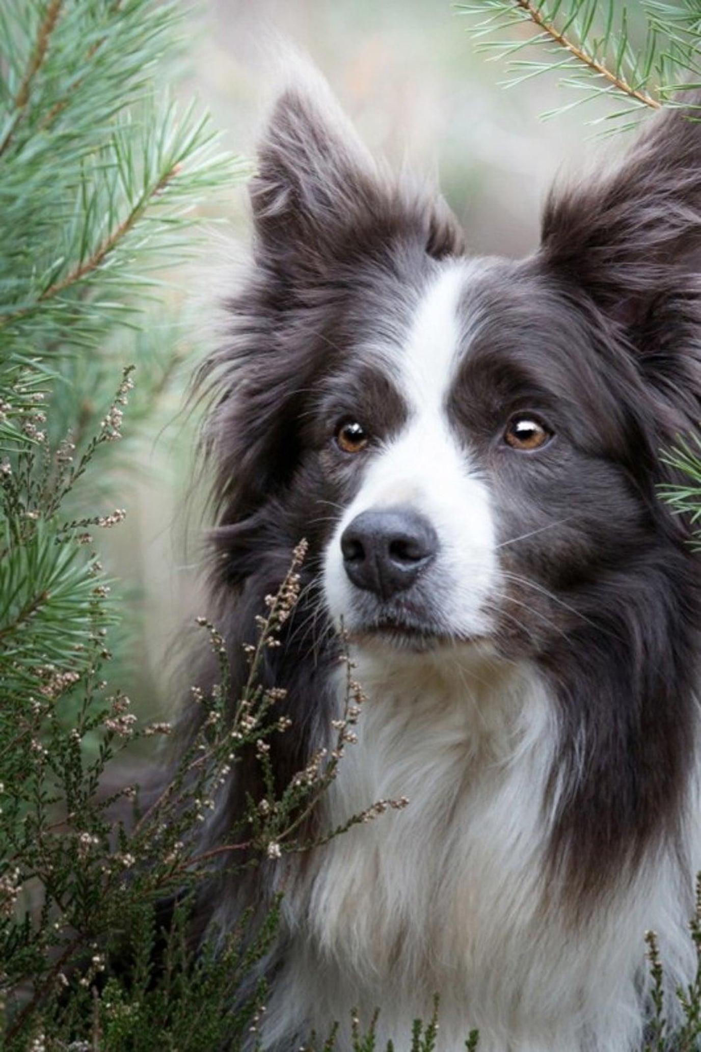 A Black and White Dog Poses for a Portrait During a Pet-Friendly Airbnb Experience In the UK.