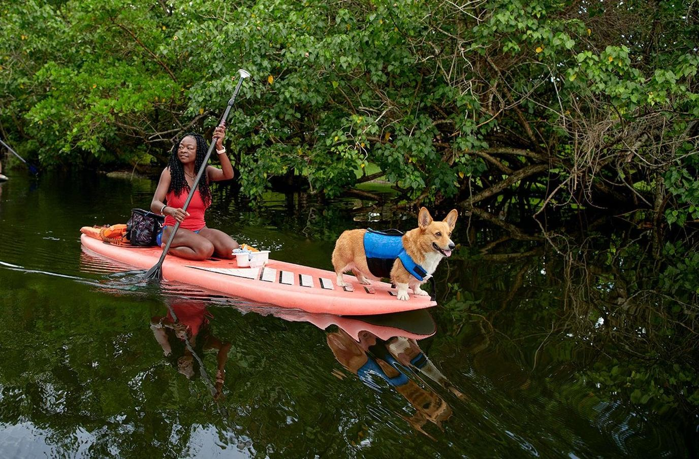 A Woman Stand Up Paddleboards With A Corgi.