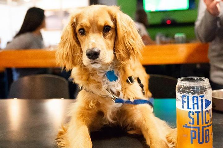 A Dog Sits at the Bar of the Pet-Friendly Flatstick Pub.