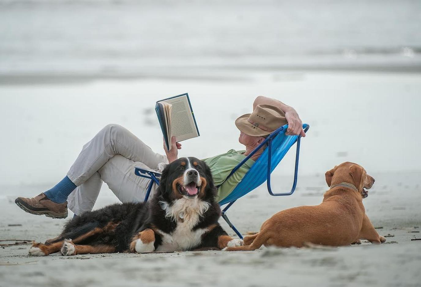 A Man Reads in a Beach Chair as Two Dogs Lie on a Pet-Friendly Beach in Jekyll Island.