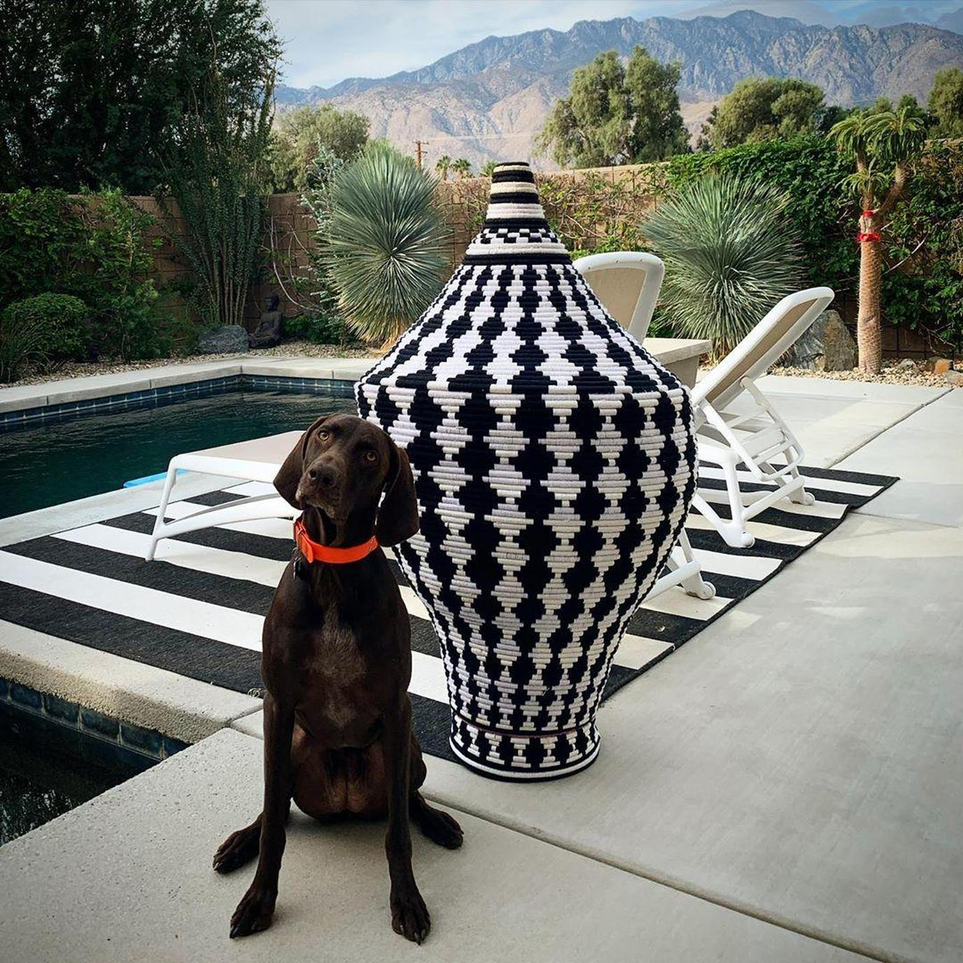 A Dog Sits Beside a Black and White Woven Urn in Pet-Friendly Palm Springs.