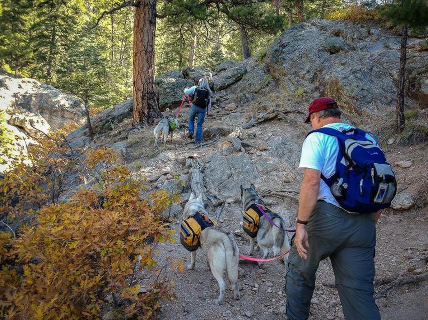 Bring Fido to dog-friendly Santa Fe for a weekend destination you'll both love.