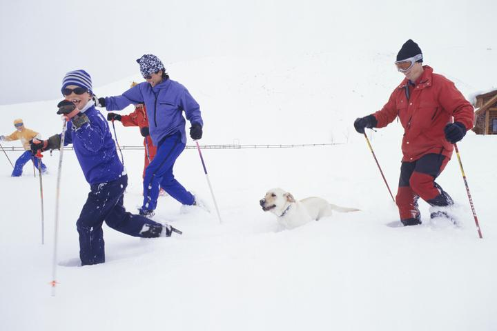 8 Pet-Friendly Ski Resorts Where You Can Play in the Snow With Fido