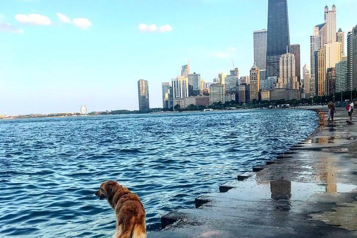 10 Pet-Friendly Cities for a Weekend Getaway in 2020