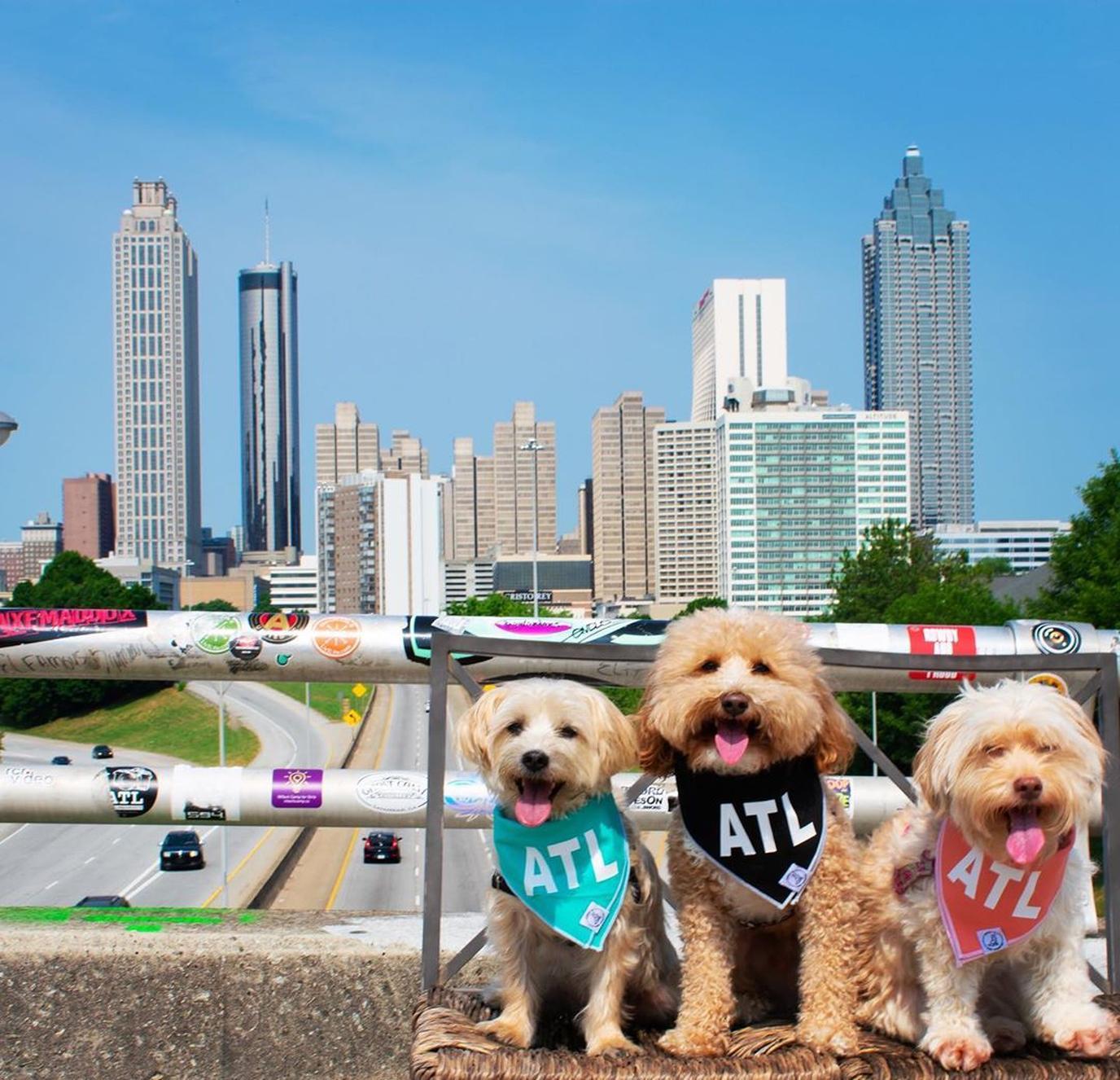 Bring your dog to dog-friendly Atlanta, GA.