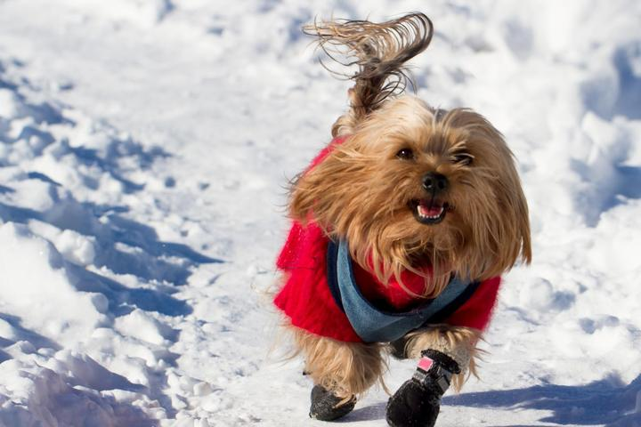 Winter Wienerland: BringFido's Cold-Weather Pet Safety Tips for Dogs