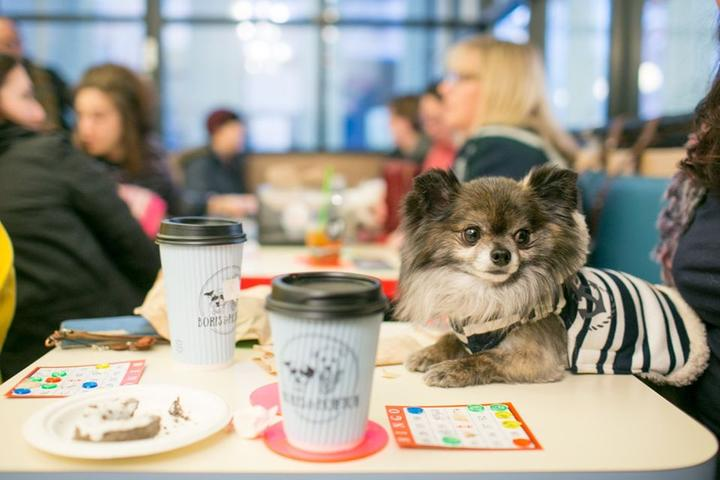"8 Restaurants That Welcome Dogs Inside to ""Sit"" for a Meal and ""Stay"" for Dessert"