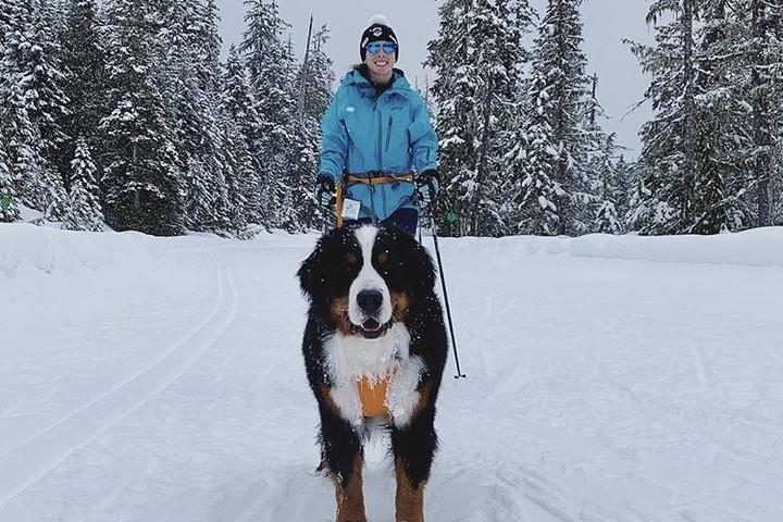 Cross-Country Ski With Your Canine In These Scenic Locations