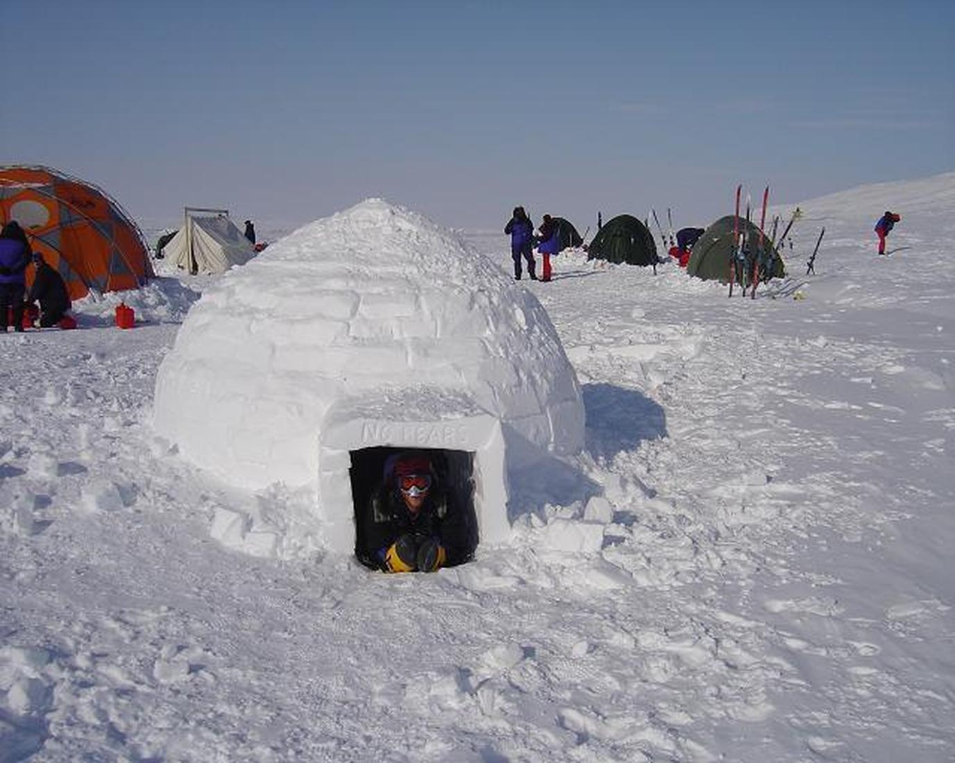 Take a tour of historic Inuit sites and stay in an igloo with your dog on Baffin Safari tours.