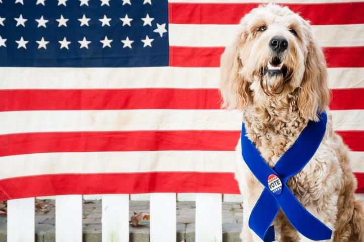The Dogs of the 2020 Democratic Candidates for Presidency.