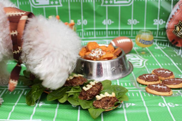 A Dog Admires a Spread of Pet-Friendly Snacks for the Big Game.